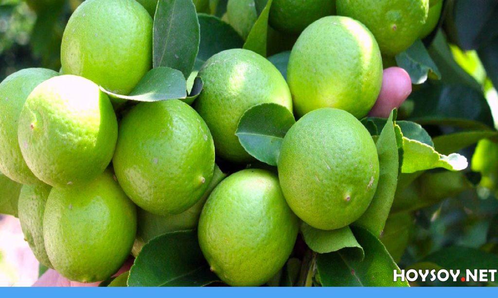 6 Beneficios del limón