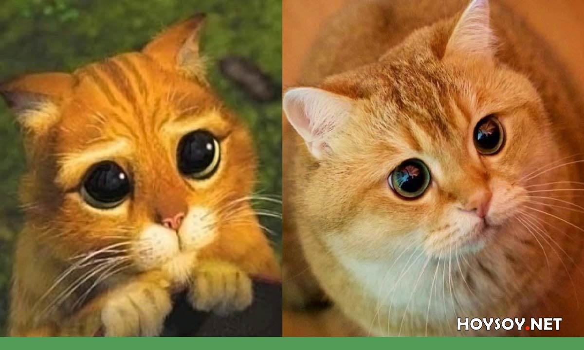 emociones que te harán sentir los gatos