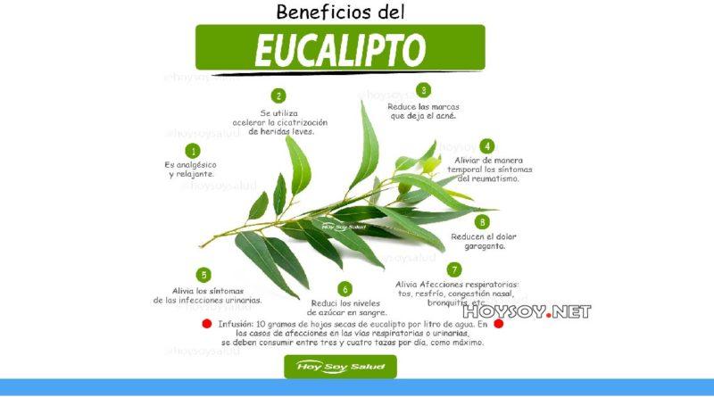 Beneficios de el eucalipto