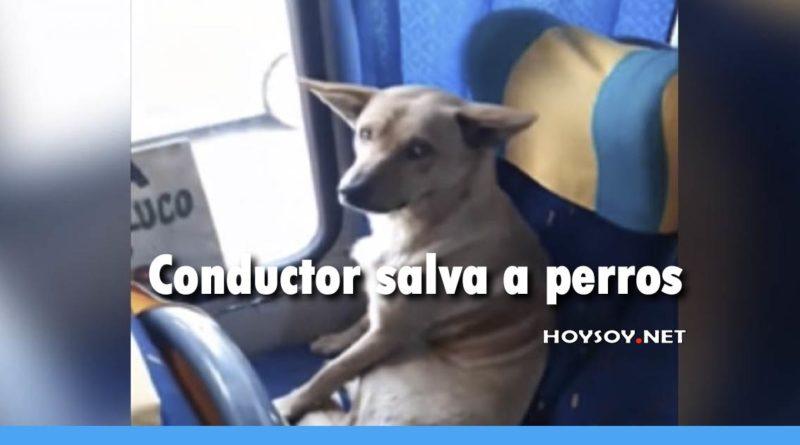 Conductor salva a dos perros