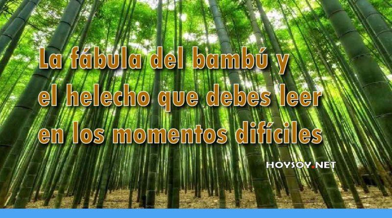 La fábula del bambú y el helecho que debes leer en los momentos difíciles