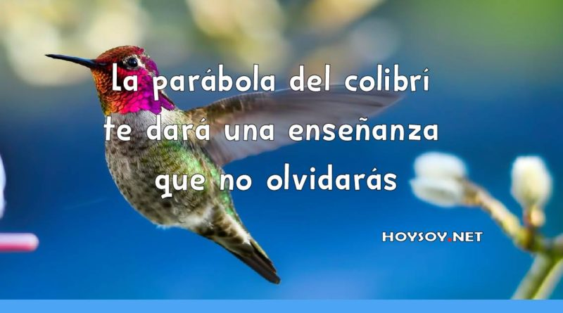 La parábola del colibrí te dará una enseñanza que no olvidarás