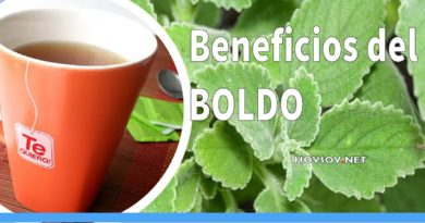 Beneficios del boldo