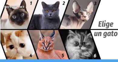 Elige a un gato