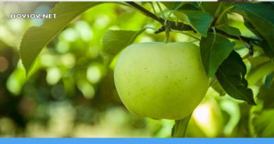 beneficios de la manzana verde