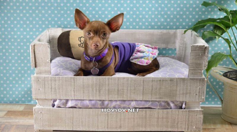 ¿Cómo deben ser las camas para perros?