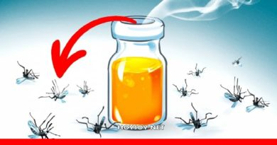Remedios Caseros para los Mosquitos