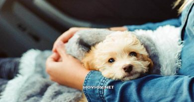 Los perros nunca mueren, duermen en nuestros corazones.