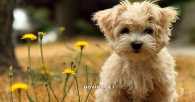 ¿Qué debes saber sobre los cuidados de tu mascota?