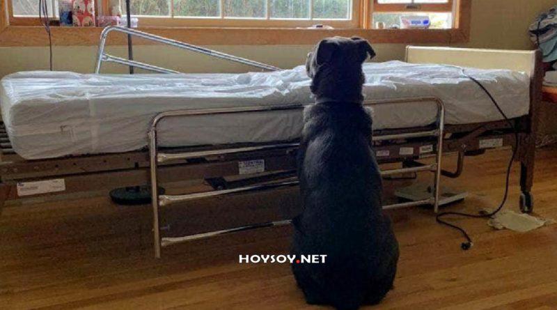 Un perro espera a su dueño junto a la cama del hospital sin saber que ha muerto