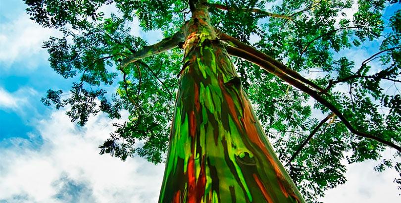 hoy-soy-árboles-colores
